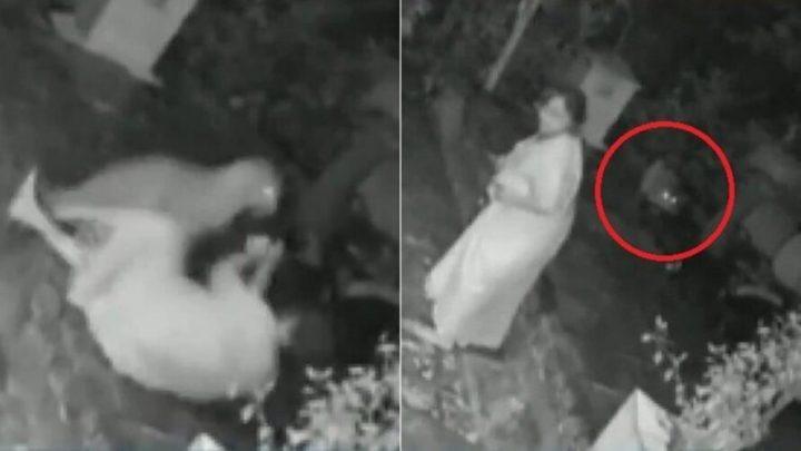 Vídeo: mulher é atacada por leopardo e se defende com bengala
